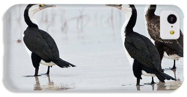 IPhone 5c Case featuring the photograph Three Cormorants by Werner Padarin