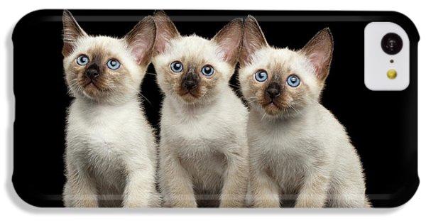 Cat iPhone 5c Case - Three Kitty Of Breed Mekong Bobtail On Black Background by Sergey Taran