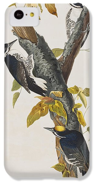 Three Toed Woodpecker IPhone 5c Case