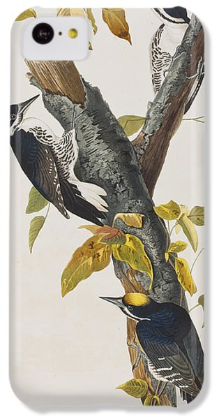 Three Toed Woodpecker IPhone 5c Case by John James Audubon