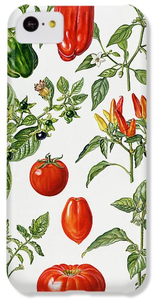 Tomatoes And Related Vegetables IPhone 5c Case by Elizabeth Rice