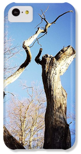 Sky iPhone 5c Case - Tree by Matthias Hauser