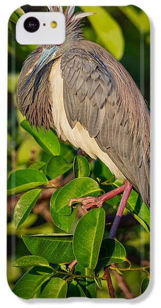 Tricolored At The Venice Rookery IPhone 5c Case
