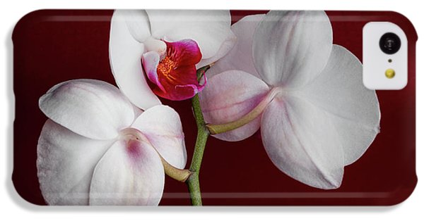 Orchid iPhone 5c Case - Trio Of Orchids by Tom Mc Nemar