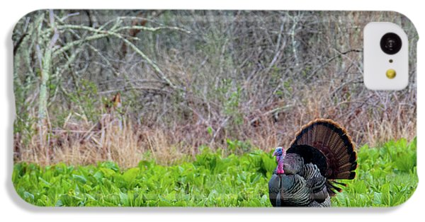 IPhone 5c Case featuring the photograph Turkey And Cabbage by Bill Wakeley