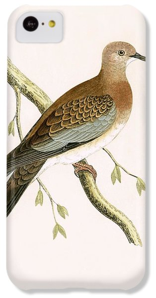 Turtle Dove IPhone 5c Case by English School