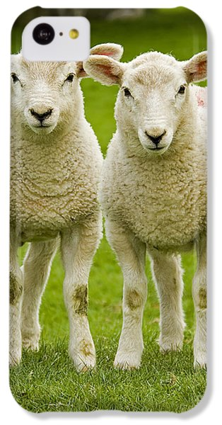 Sheep iPhone 5c Case - Twin Lambs by Meirion Matthias