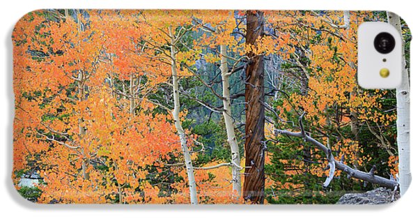 Twisted Pine IPhone 5c Case by David Chandler
