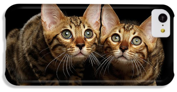 Two Bengal Kitty Looking In Camera On Black IPhone 5c Case by Sergey Taran