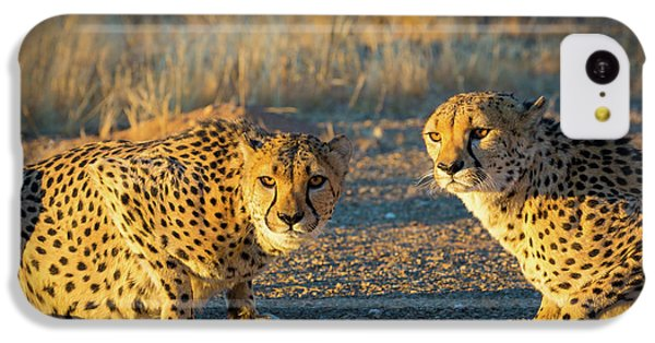 Two Cheetahs IPhone 5c Case by Inge Johnsson
