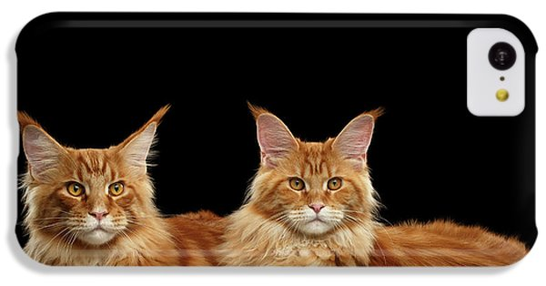Cat iPhone 5c Case - Two Ginger Maine Coon Cat On Black by Sergey Taran