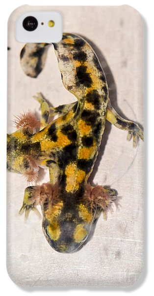 Two-headed Near Eastern Fire Salamande IPhone 5c Case