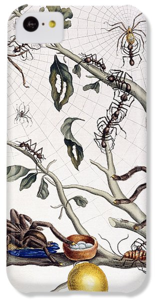 Various Arachnids From South America, 1726  IPhone 5c Case