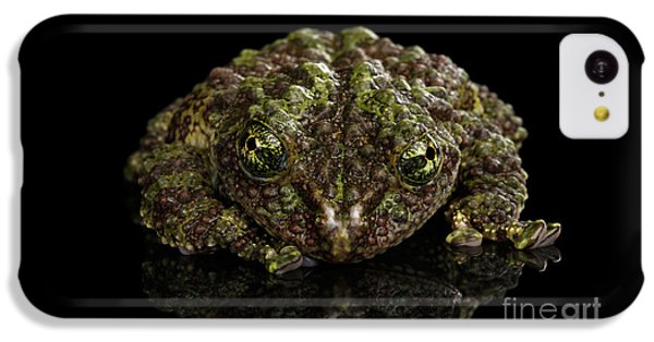 Vietnamese Mossy Frog, Theloderma Corticale Or Tonkin Bug-eyed Frog, Isolated On Black Background IPhone 5c Case
