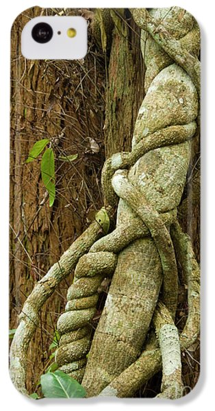 IPhone 5c Case featuring the photograph Vine by Werner Padarin