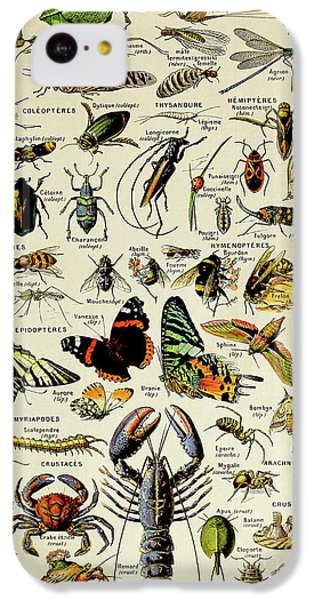 Vintage Illustration Of Various Invertebrates IPhone 5c Case