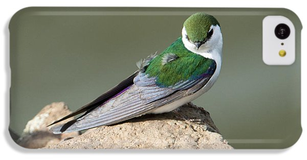 Violet-green Swallow IPhone 5c Case by Mike Dawson