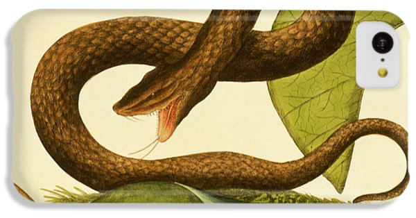 Viper Fusca IPhone 5c Case by Mark Catesby