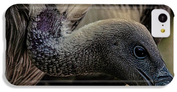 Vulture IPhone 5c Case
