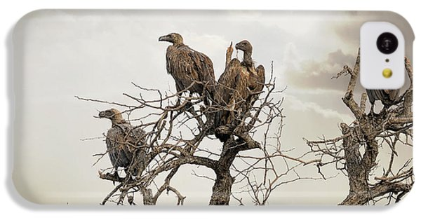 Vultures In A Dead Tree.  IPhone 5c Case by Jane Rix