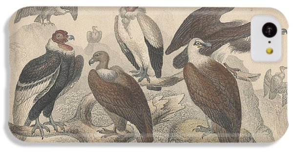 Vultures IPhone 5c Case by Rob Dreyer