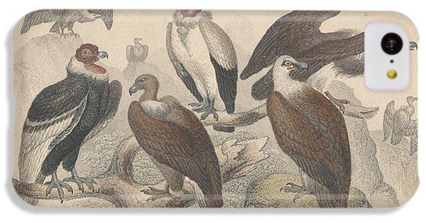 Vultures IPhone 5c Case by Anton Oreshkin