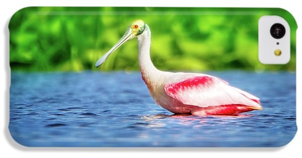 Wading Spoonbill IPhone 5c Case by Mark Andrew Thomas