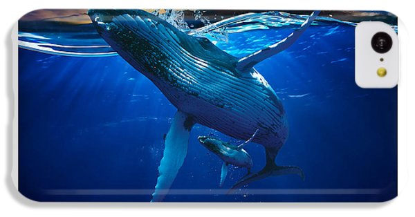 Whale Watching Art IPhone 5c Case