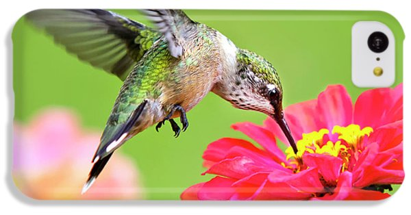 Humming Bird iPhone 5c Case - Waiting In The Wings Hummingbird Square by Christina Rollo
