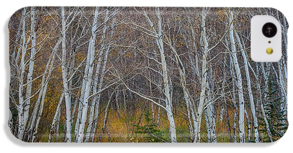 IPhone 5c Case featuring the photograph Walk In The Woods by James BO Insogna