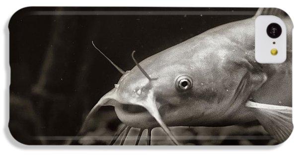Catfish iPhone 5c Case - White Cat by Susan Capuano