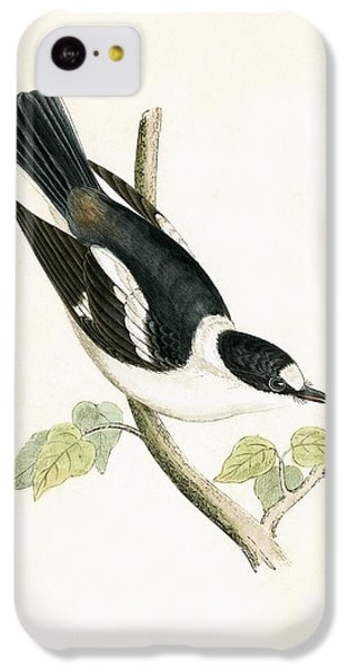 Flycatcher iPhone 5c Case - White Collared Flycatcher by English School