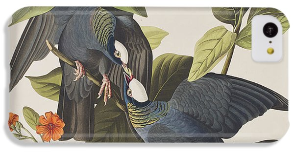 White Crowned Pigeon IPhone 5c Case by John James Audubon