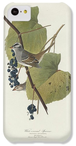 White-crowned Sparrow IPhone 5c Case by Rob Dreyer