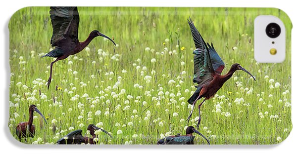 White-faced Ibis Rising, No. 1 IPhone 5c Case