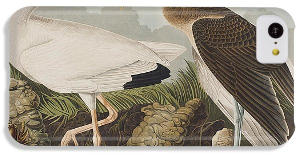Ibis iPhone 5c Case - White Ibis by John James Audubon