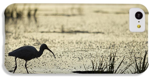 Ibis iPhone 5c Case - White Ibis Morning Hunt by Dustin K Ryan