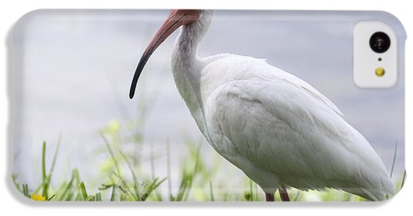 White Ibis  IPhone 5c Case by Saija  Lehtonen