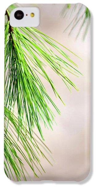 White Pine Branch IPhone 5c Case by Christina Rollo