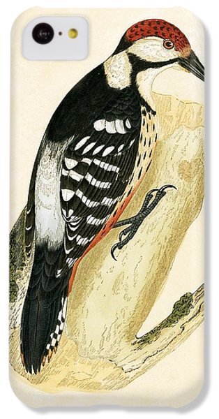 White Rumped Woodpecker IPhone 5c Case by English School