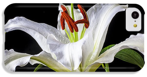 White Tiger Lily Still Life IPhone 5c Case by Garry Gay