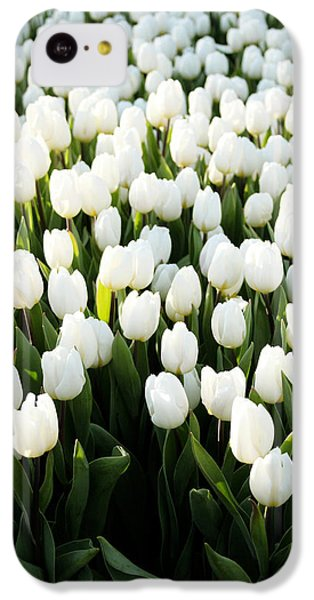 Tulip iPhone 5c Case - White Tulips In The Garden by Linda Woods