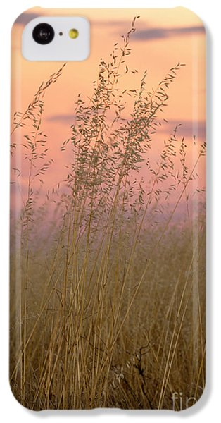 IPhone 5c Case featuring the photograph Wild Oats by Linda Lees