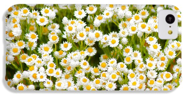 iPhone 5c Case - Wildflowers by Holly Kempe