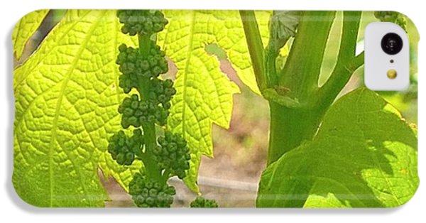 Green iPhone 5c Case - #wine On The #vine 😊 #vineyard by Shari Warren