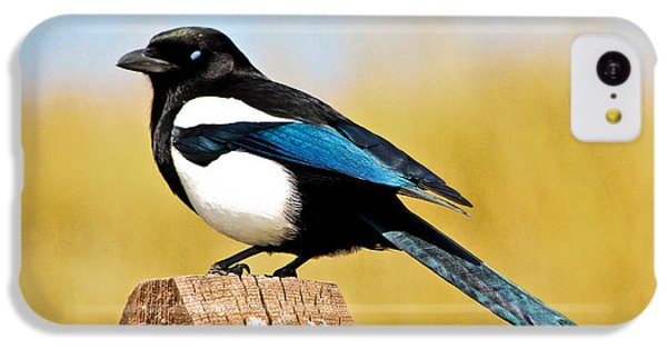 Magpies iPhone 5c Case - Winking Magpie by Mitch Shindelbower