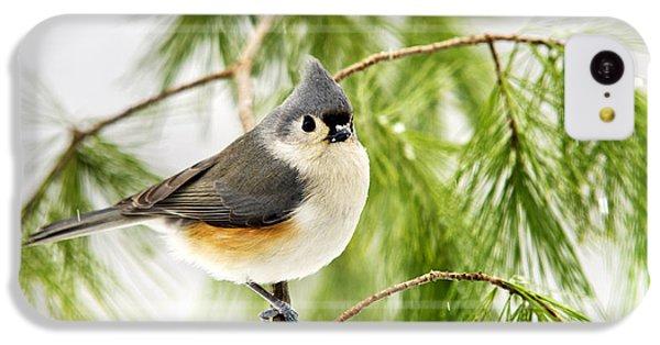 Winter Pine Bird IPhone 5c Case by Christina Rollo