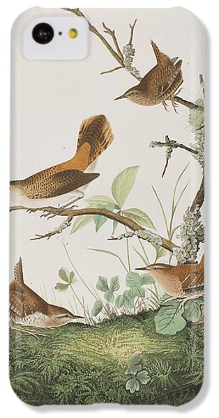 Winter Wren Or Rock Wren IPhone 5c Case