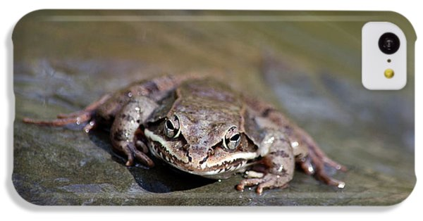 Wood Frog Close Up IPhone 5c Case by Christina Rollo