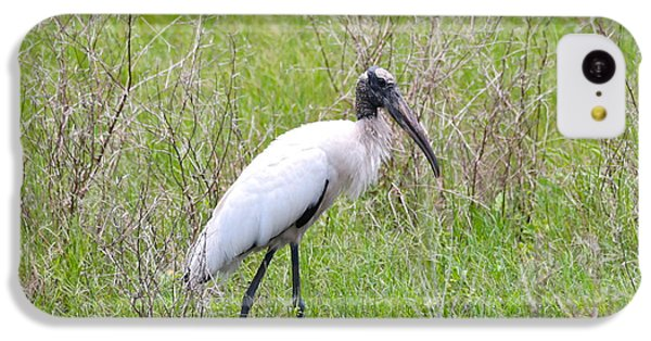 Wood Stork In The Marsh IPhone 5c Case